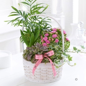 Florist Choice Planted Basket